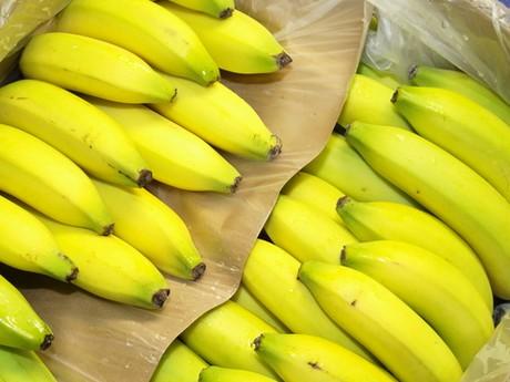 9af68ba0e8febd Het bedrijf Andreas Kupfer & Sohn beschikt over een eigen bananenrijperij  om haar bananen optimaal te kunnen laten rijpen.