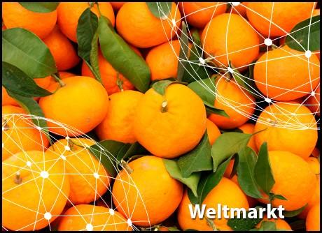 Übersicht Weltmarkt Mandarinen