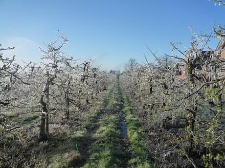 äpfel Frost