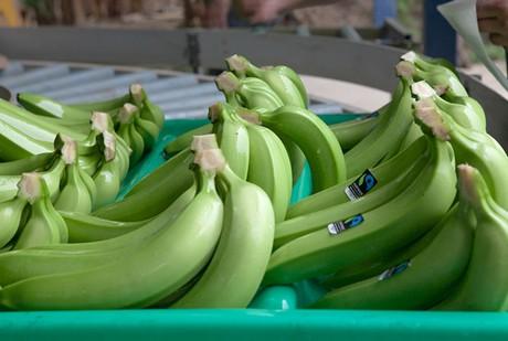 Germany: Fairtrade instead of cheap bananas