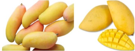 Germany: Thai organic mangoes popular with top gastronomers